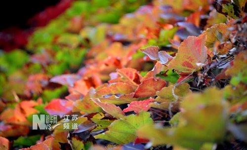 南京:多彩的校园之秋(图)