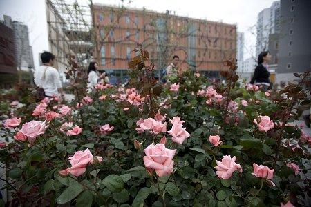 法国玫瑰世博路曲折 中方紧急协调终可入境