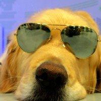 导盲犬小P带游客体验盲人世界全程实拍