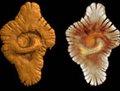 组图:加蓬发现21亿年前最早多细胞生物化石