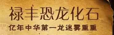"""""""中华第一龙""""迷雾重重 世博会后将赠上海"""