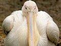 高清:英国《太阳报》评选世界十大最胖动物