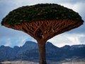 组图:探秘也门神奇小岛索科特拉岛