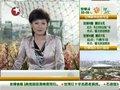 视频:台湾馆现黄牛门票 警方将不定期验票