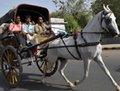 """高清:新德里 正在消失的""""都市牧马人"""""""