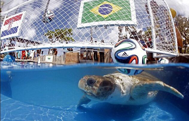 又出预言帝!神龟揭幕战挺巴西获胜 接班保罗?