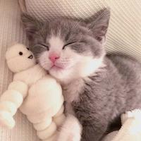 萌宠庄园:吸一口小奶猫