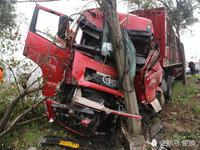 钟祥一货车为避人撞树车头全烂司机被困无法动弹