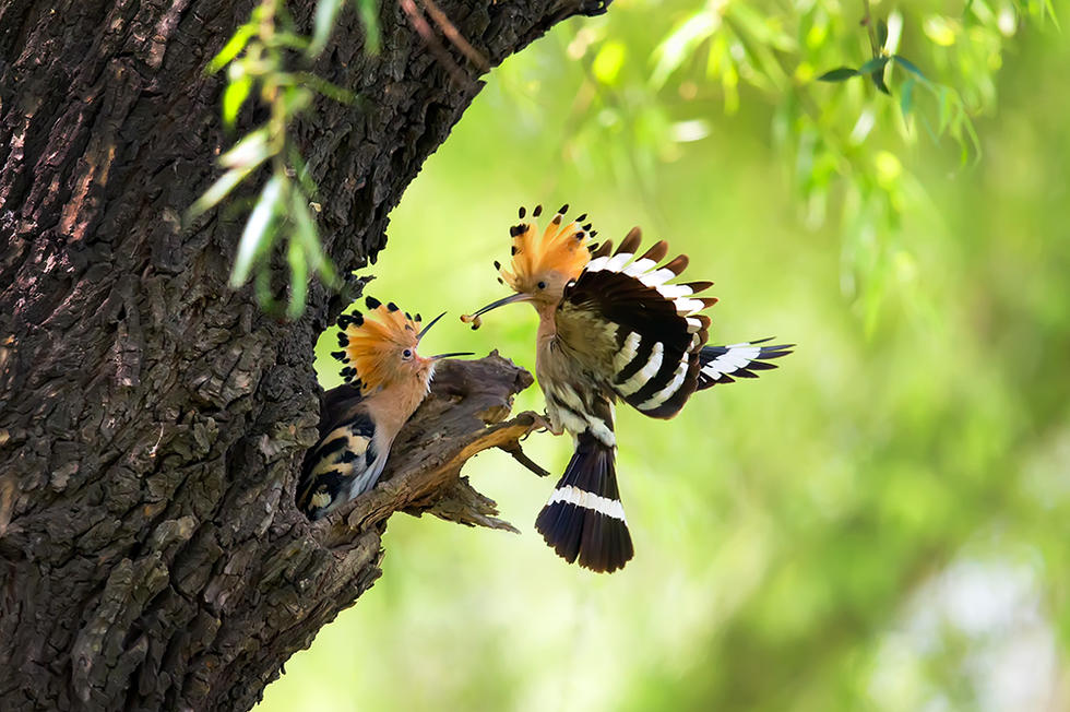 自然界的精灵:鸟