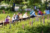 玉渊潭公园上万株鲁冰花进入最佳观赏期 童谣里花你见过吗?