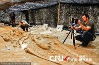 智利发现至少80具数百万年前古鲸鱼化石(图)