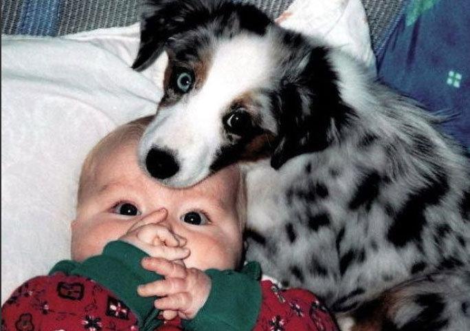 太萌了 宝贝儿与宠物 一家亲
