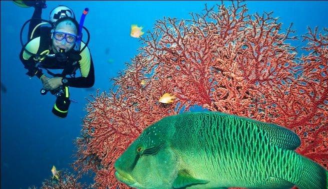 亚太十大美丽海底世界:夏威夷岛如水晶宫(图) - 科学探索 - 探索发现|宇宙奥秘|自然地理|历史考古