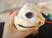 2011十大最怪异动物盘点:恶魔蠕虫和独眼鲨鱼