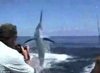 美国男子钓鱼遭600磅黑枪鱼跃出水面刺穿口鼻