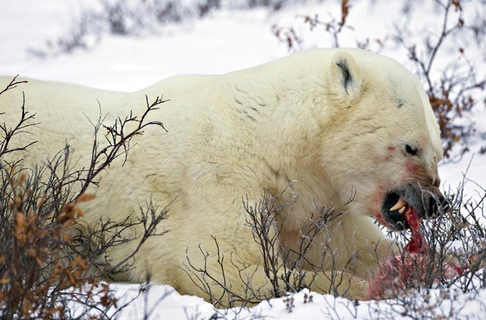 熊熊乐园小月亮-  资料图:2009年12月8日,一个美国领导的科研小组发布一组照片,