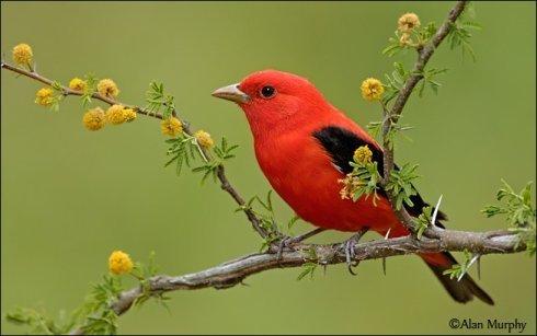 世界各地最漂亮鸟类大集锦(组图) - 科学探索 - 探索发现|宇宙奥秘|自然地理|历史考古