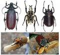昆虫的特异功能