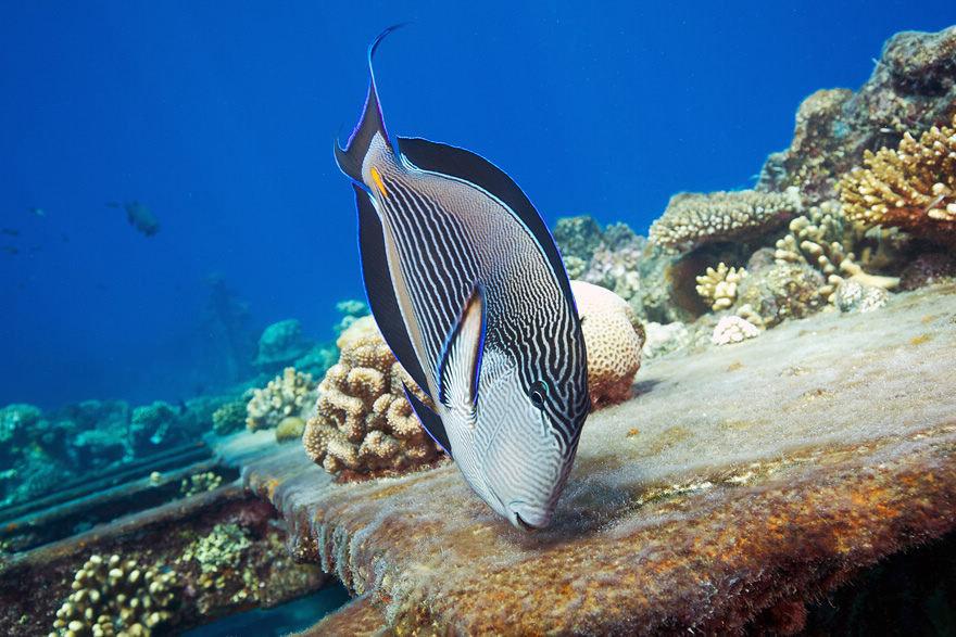 摄影师拍摄梦幻般的海洋生物(组图) - 科学探索 - 科学探索