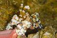 2012年度最佳水下摄影:超萌虾虎鱼和小丑虾