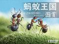蚂蚁王国的战争