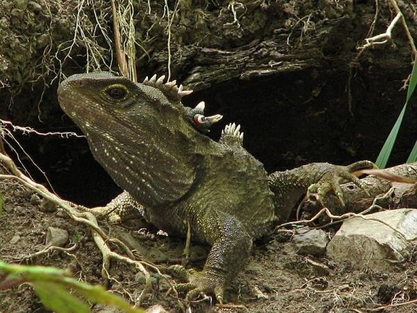 [转载]盘点地球上五种体型最大的恐怖爬行动物(图)