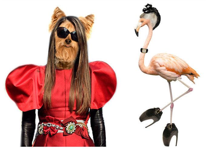 Fashimal:动物装扮也时尚 - 泰琥 - danden0018的博客