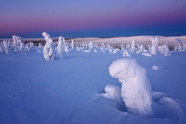 """严寒造就北极罕见""""雪树""""奇观 - 海阔山遥 - ."""