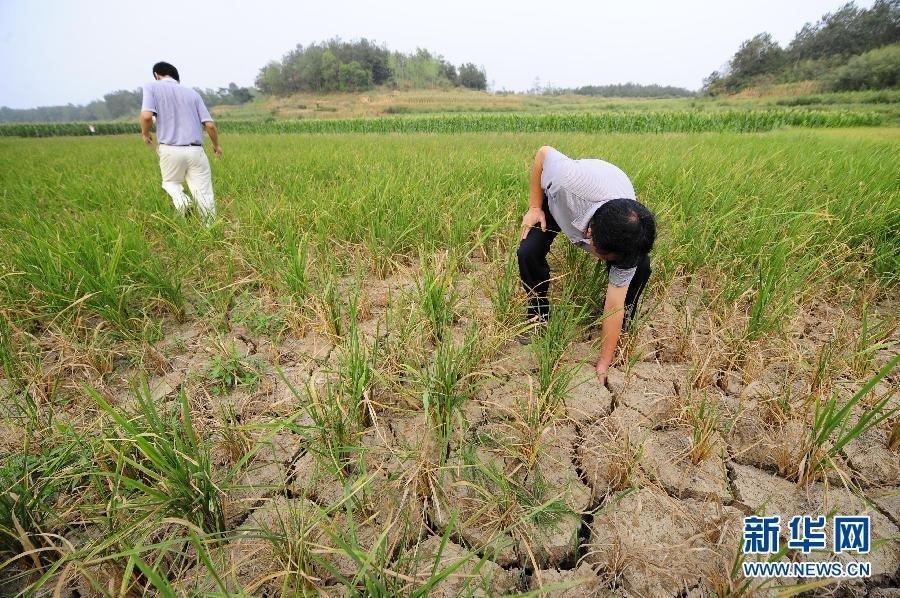 我的家乡湖北随州遭遇60年一遇特大干旱,惨啊  天气 龙三公子 地名 第10张