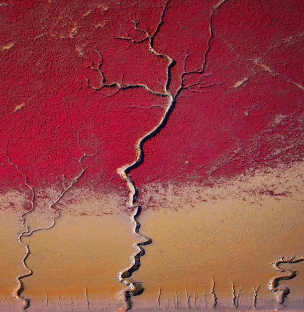 金质收藏-赤霞与森林.红海滩印象-高树林