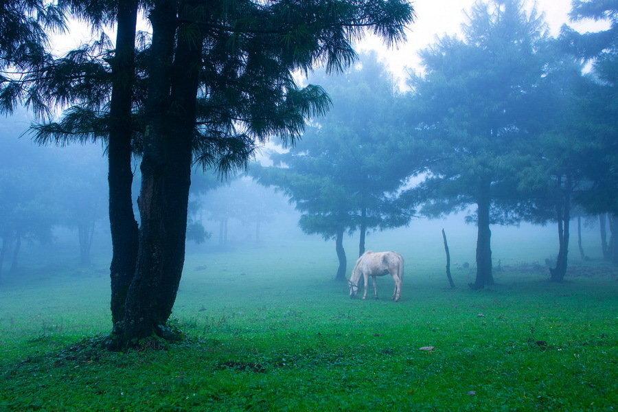 优秀作品-雾满草场-王铭华