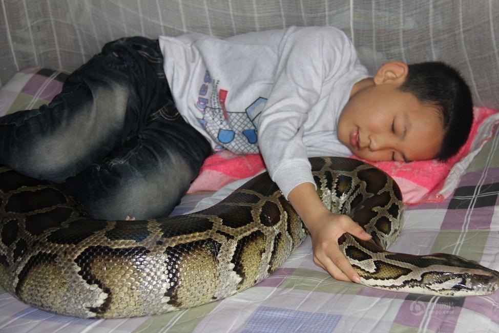 高清 13岁男孩与巨蟒同居12年 人蛇同睡一床
