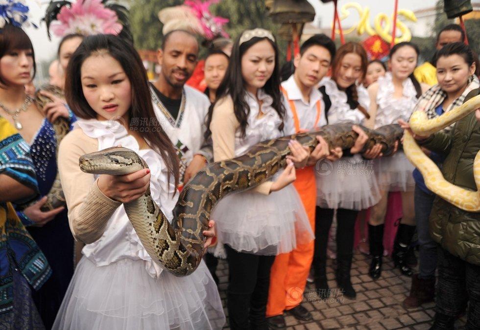 重庆美女亲吻大蟒蛇求沾喜气