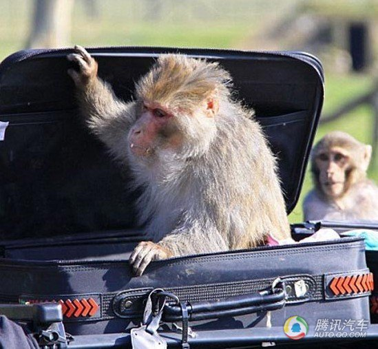 组图:奔驰惨被猴子大卸八块