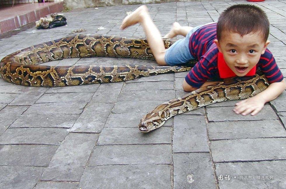人口养殖蟒蛇在哪个省_大蟒蛇