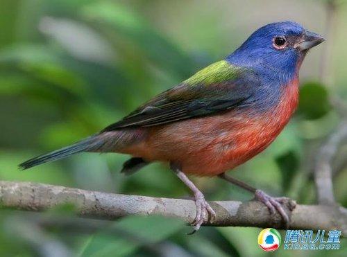 组图:世界上色彩最艳丽的七大鸟类