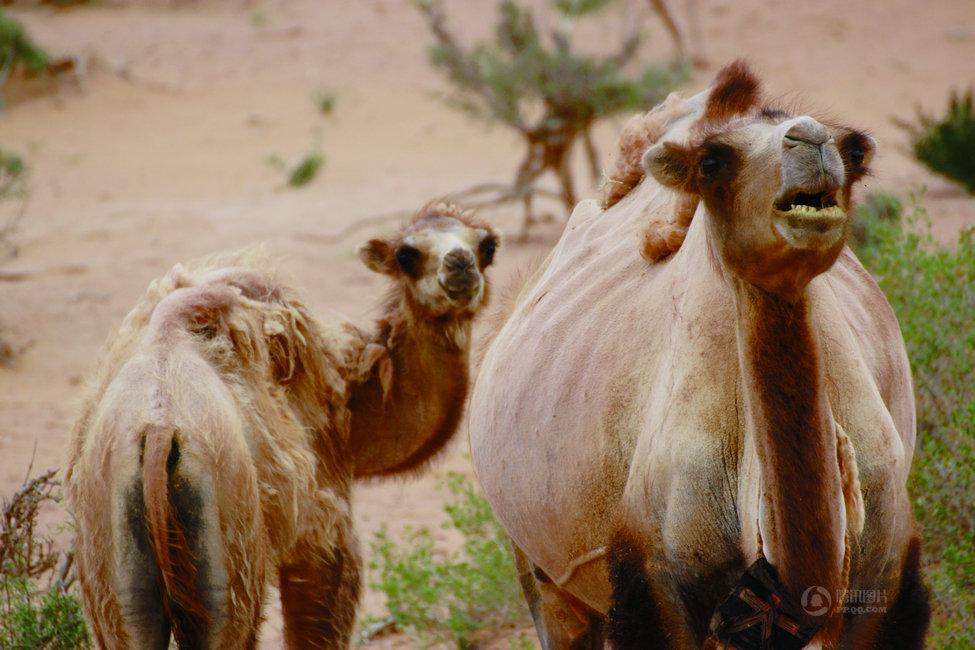 拉网围栏阻碍动物迁徙等怪现象