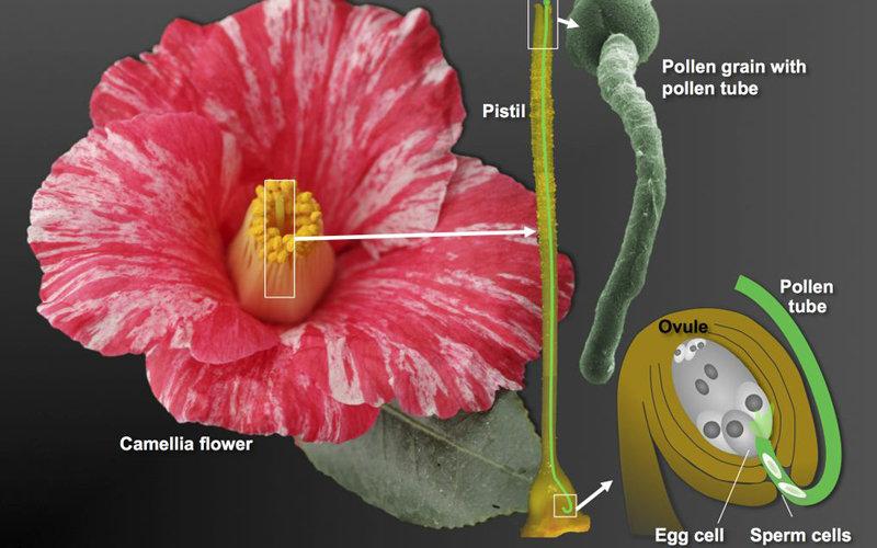 认识植物的步骤