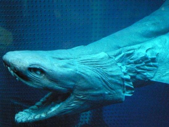 组图:深海中极其罕见的七大奇特生物