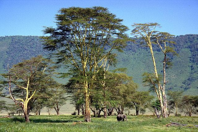 而广阔的火山口草木茂盛、土壤肥沃,为各种各样的野生动