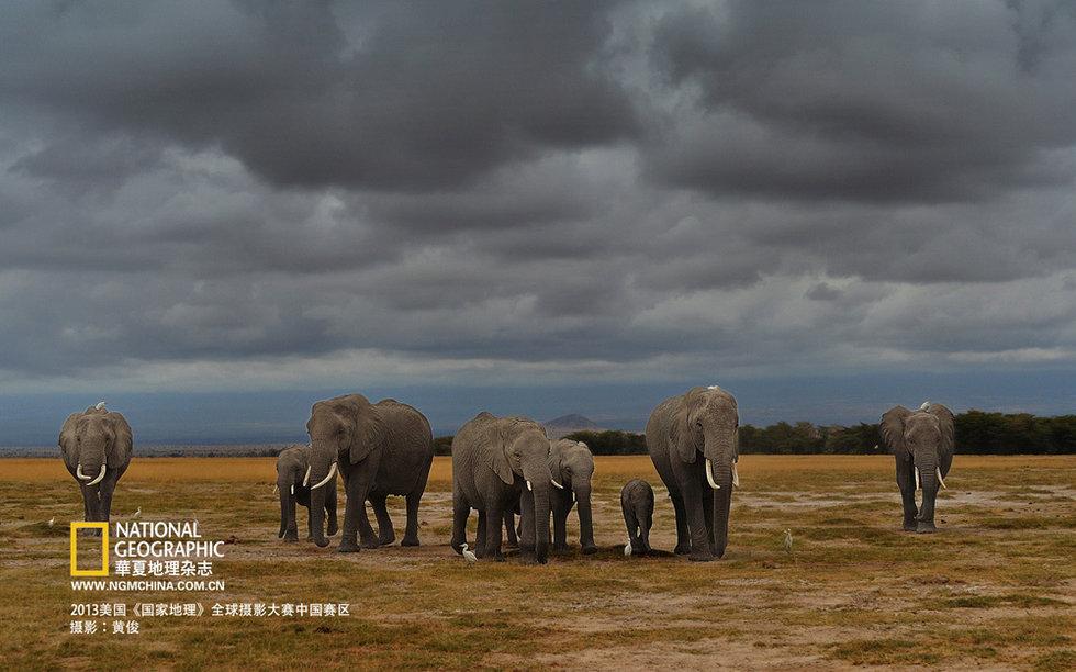 《国家地理》摄影赛中国区参赛作选登动物