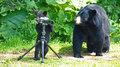超萌的黑熊