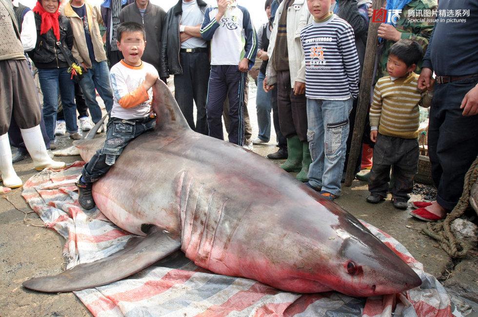 海域捕上这条大鱼