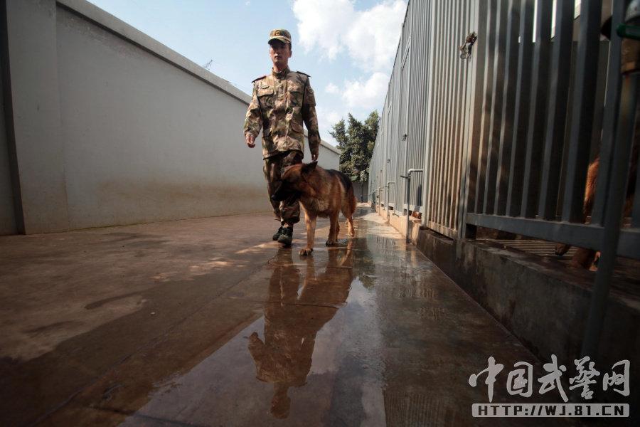 武警老兵退伍离营 爱犬死咬行李不放( 高清组图) - 乌裕尔河 - 乌裕尔河2