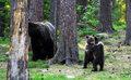 熊宝宝跳圆圈舞