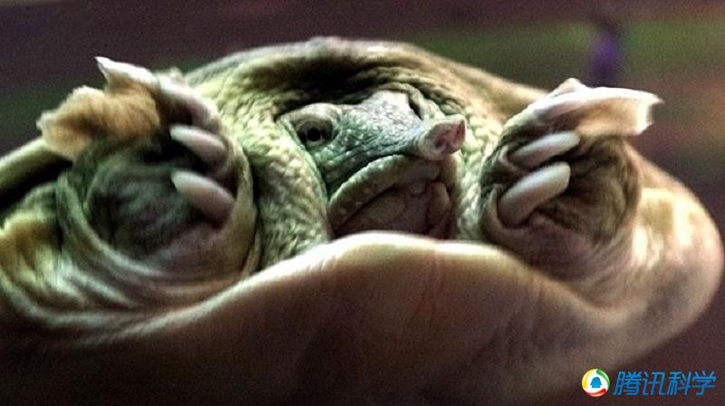 [转载]这些动物太丑了!吃什么长的呢?