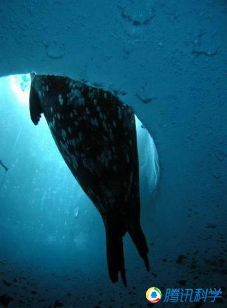 潜水员拍摄绚丽危险的海洋生物