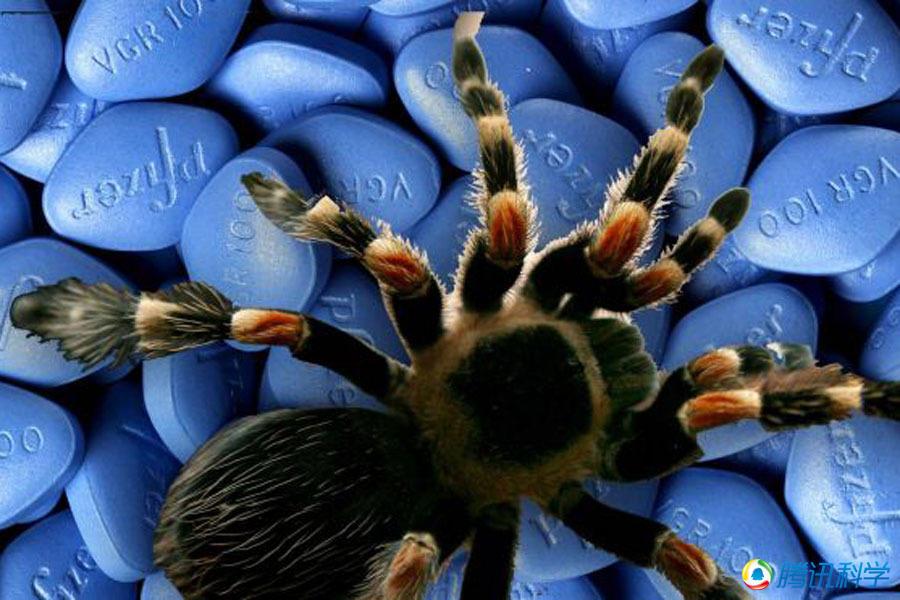 巴西流浪蜘蛛蜘蛛咬伤的五大可能后果:等于服用超级伟哥