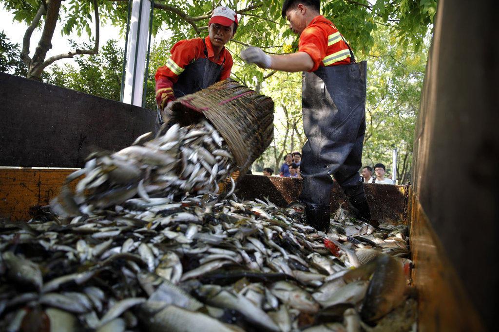 佛山一公园湖内鱼密度过大 2万斤鱼被填埋