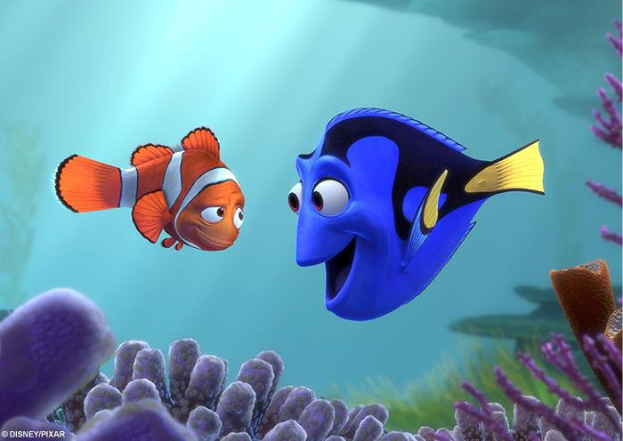 真实版海底总动员 摄影师抓拍印尼小丑鱼